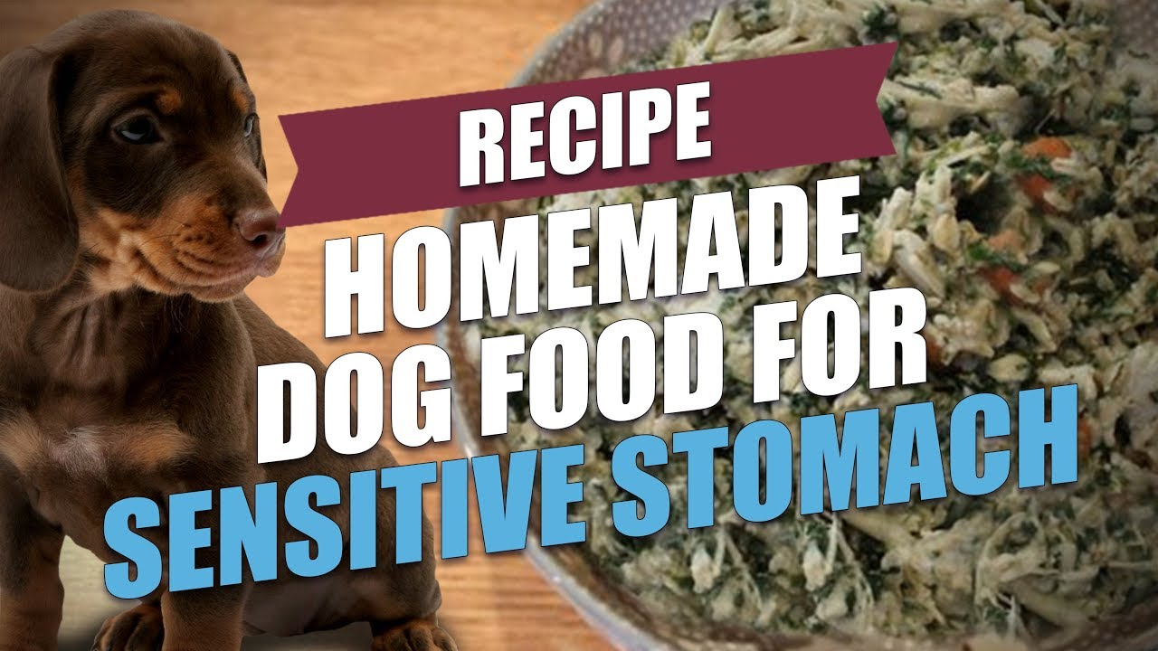 Homemade Dog Food For Sensitive Stomach Recipe For Gi Disorders