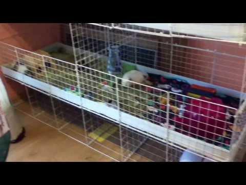 Guinea Pig C&C Cage Tour 3
