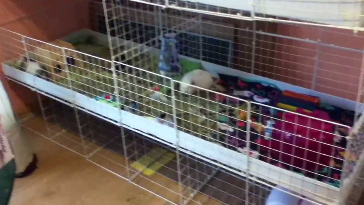 Guinea pig c c cage tour 3 youtube for Guinea pig cage for 3