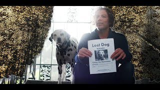 Lost Dalmatian Dog • Silver Lining • Moet Moment Filmfestival Submission