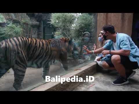 Inilah Harga Tiket Masuk Bali Zoo 2020 Kebun Binatang Bali Balipedia