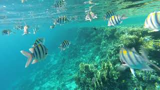 Snorkeling Sharm El Sheikh Red sea Egypt