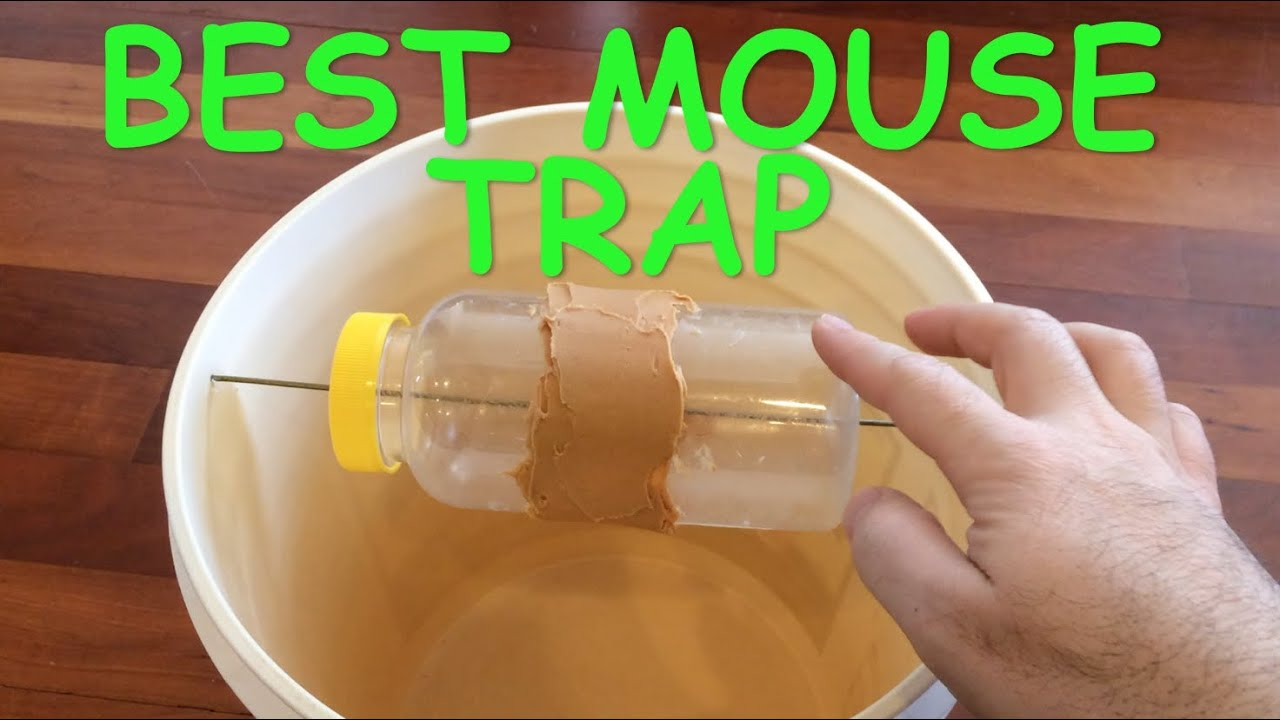 best mouse trap ever mice trap catches dozens of mice. Black Bedroom Furniture Sets. Home Design Ideas