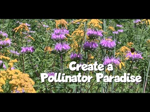 Young gardener activities – create a pollinator paradise