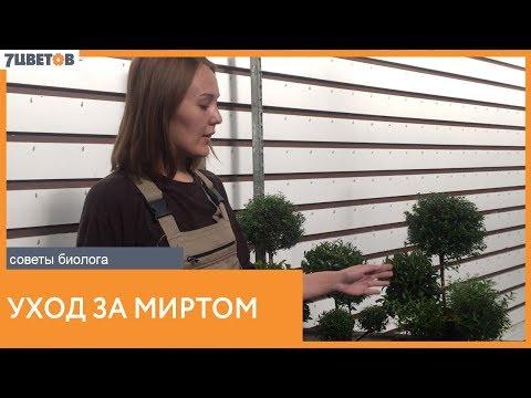 Уход за растениями семейства миртовые. Рекомендации биолога компании 7ЦВЕТОВ
