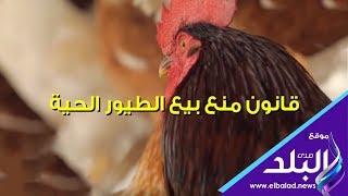 صدي البلد | معلومات عن قانون منع بيع الطيور الحية