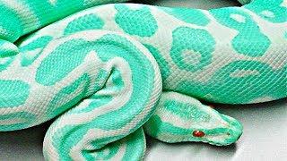 10 Serpientes Más Venenosas Y Mortíferas Del Planeta
