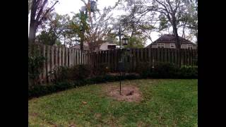 Time Lapse: Squirrels And Birds At The Bird And Squirrel Feeder