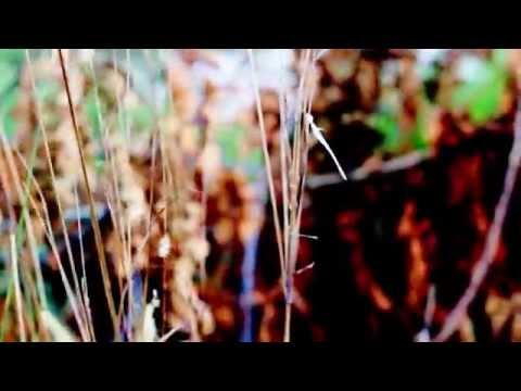 Lakes & Snadders - Now I Claim Your Sun Feat. Elle Deen Official Music Video