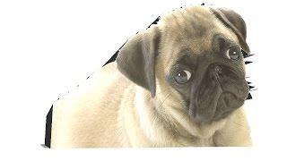 Abc Nursery Alphabets d is for Dog Dah Dah Dog by Aisha