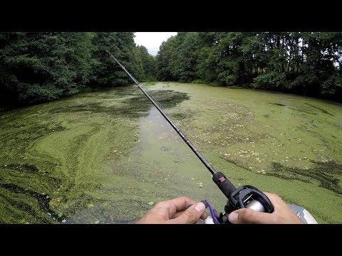 Лесной Пруд ЗАПОЛНЕН ЩУКАМИ!!! (Рыбалка в БОЛОТЕ!)