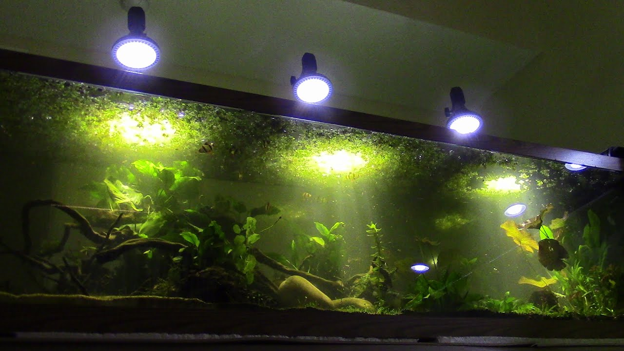 dp imagitarium gallon light amazon preferred pet tank com stand supplies aquarium winston