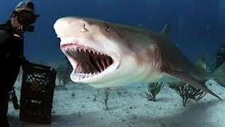 رعب هجوم القرش الابيض على رجل الغوص