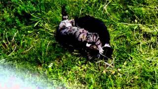 Самые смешные видео про кошек!
