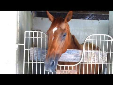 Kirby -THE TALKING HORSE - The Birthday Song_1
