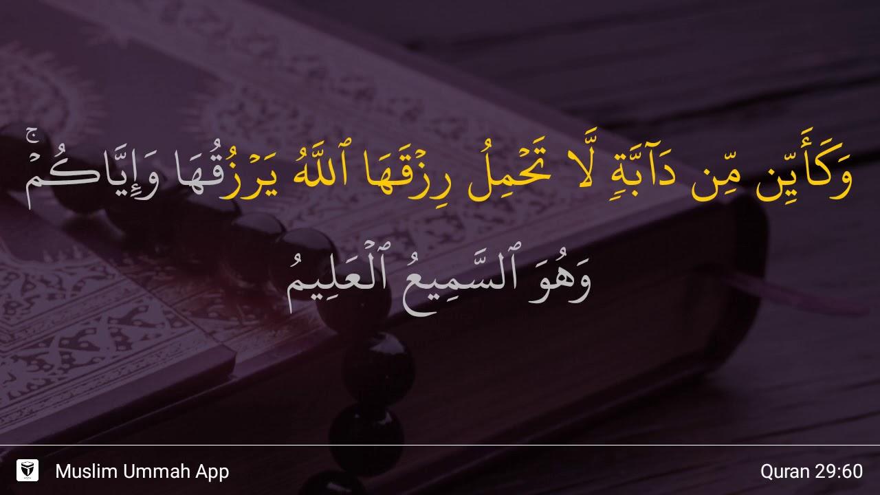 Qs 2960 Surah 29 Ayat 60 Qs Al Ankabut Tafsir Alquran
