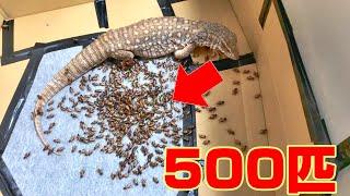 ひろしに500匹のこおろぎを一気に与えました! 早送り無し50分バージョ...