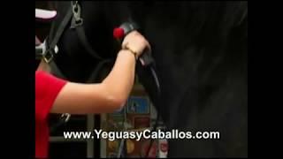Caballos: Como esquilar un caballo