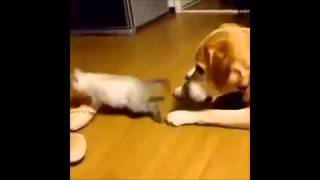 Кошки!Лучшие приколы! Cats! Best vine video!
