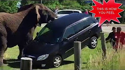 ELEPHANT AUTO INSURANCE  - REVIEW