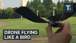This drone looks and flies just like a bird