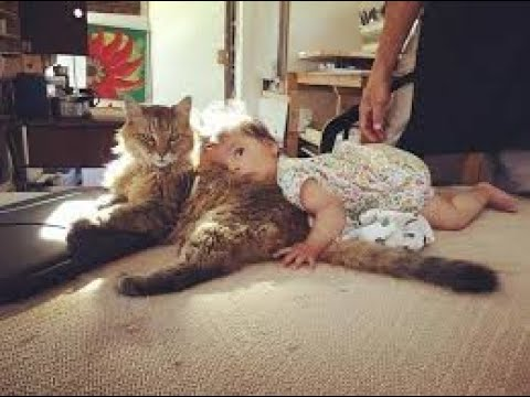 BEST FUNNY CATS , Chats marrants