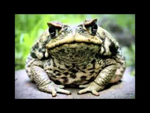 Halloween Song for All Ages - The Witch and the Toad