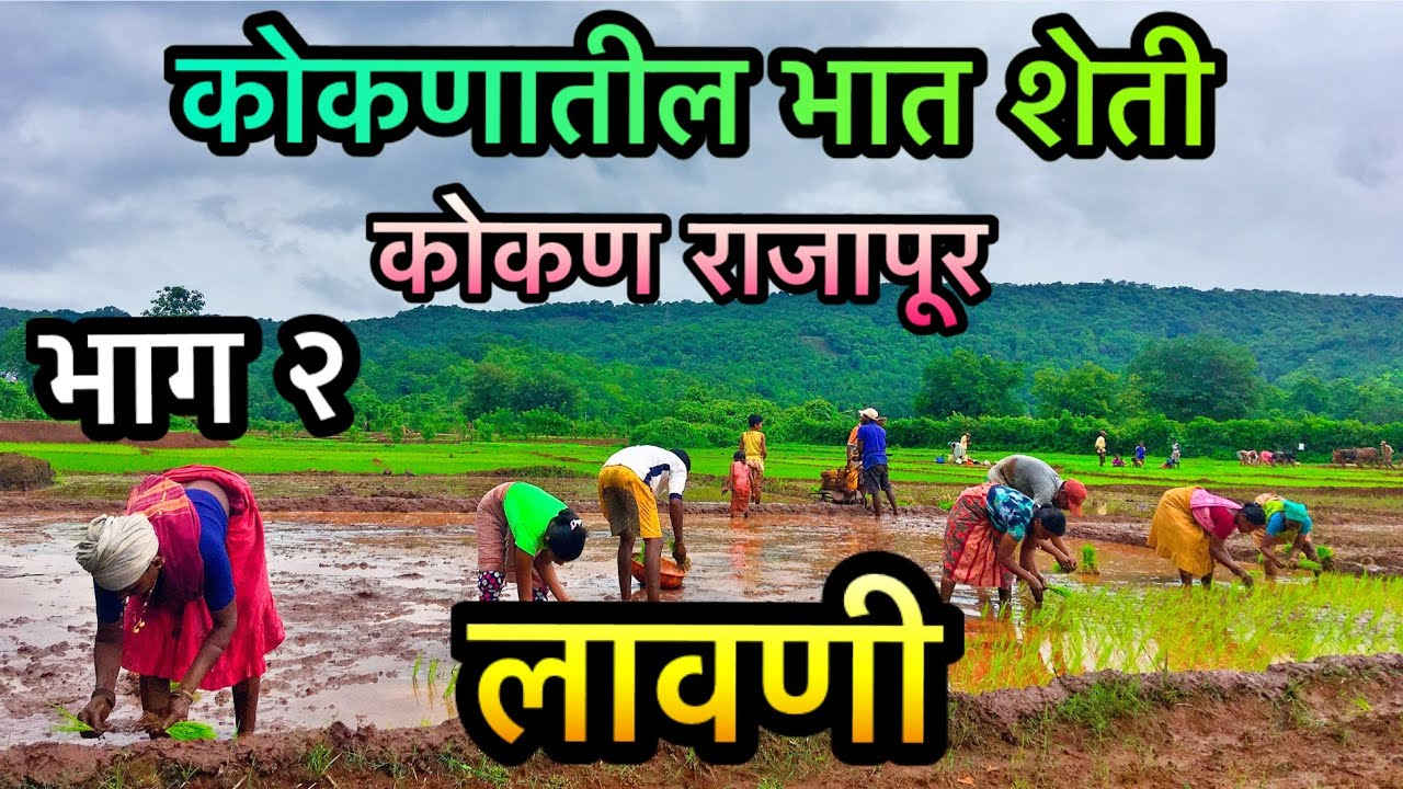 कोकणातील भात शेती | भाग २ | लावणी | Konkan Rajapur