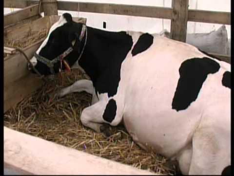 jurnal 29 01 2014 tancuri racire lapte   manuela ionascu   informatii primarie pt bani fermieri