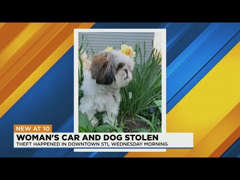 Missouri Woman's Car Stolen With Dog Inside, 'I Just Really Want Ivy Back' | iHeartRadio