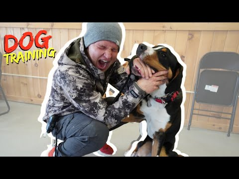 The #1 Secret to create the BEST relationship with your dog! - Creating balance with your dog