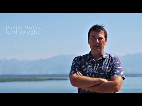 Poachers of Skadar Lake