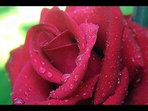 Million Scarlet Roses (Alla Pugacheva )