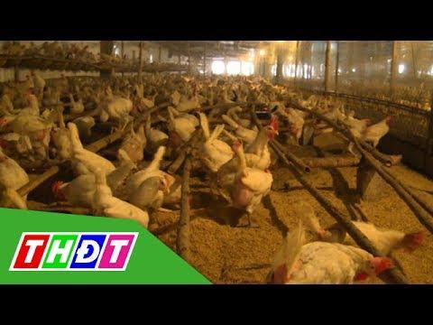Mô hình nuôi gà bằng công nghệ chuồng kín ở Nam Định | THDT