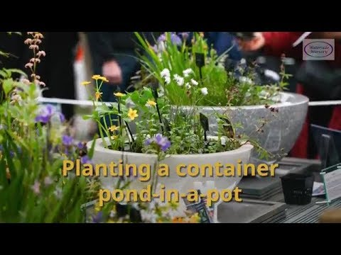 Planting our Container ponds-in-a-pot