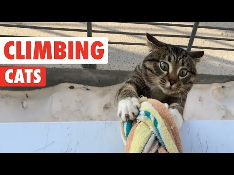 Climbing Cats | Funny Cat Compilation 2017