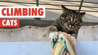 Climbing Cats | Funny Cat Compilation 2017