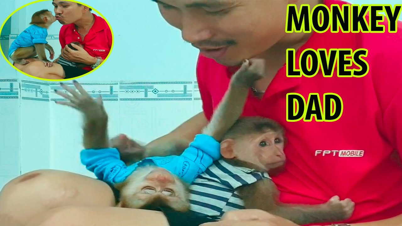 Monkey just got rescued from the hunter |  Dad takes care of the Monkey