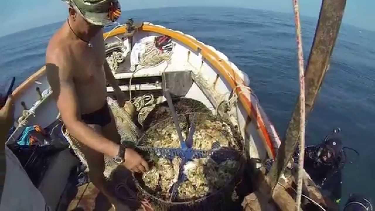 АНАПА. Черноморские мидии. Где купить и как приготовить мидии в .