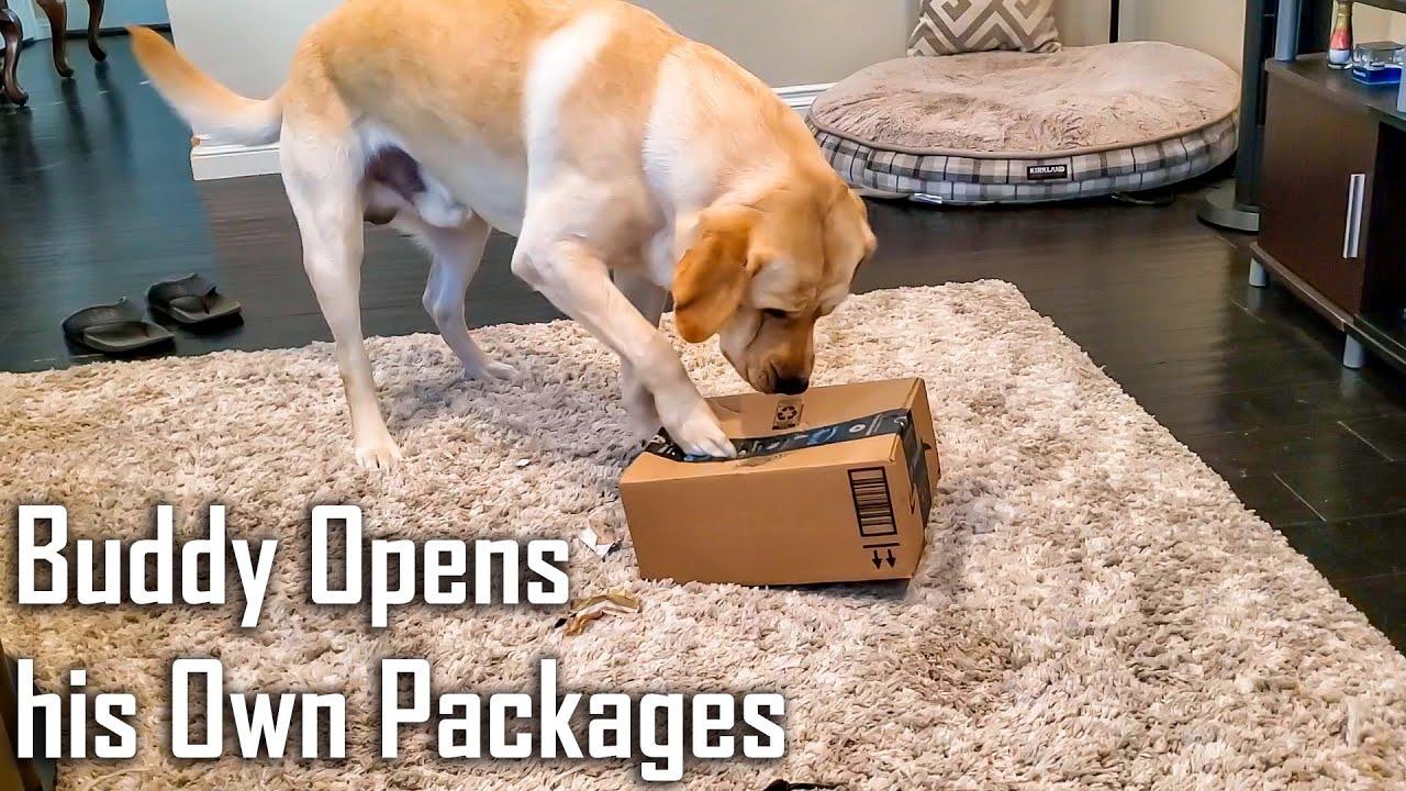 Ek Aisa Dog Jo Apne Amazon Packages Khud Kholta hai   Funny Dog Video Hindi