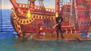 Дельфин шоу в Улан Удэ