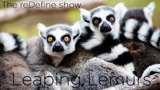 Leaping Lemurs: The reDefine Show - Animal Edition! with Tamara Lackey