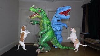 Funny Dogs & Dinosaur Dance Party! Maymo the Dog vs Dancing Dino Prank