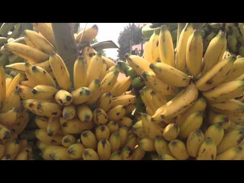 diet-plan-for-fat-burning---best-weight-loss-food-is-banana---banana-good-for-weight-loss
