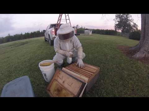 Bee removal in Fruitdale, Al