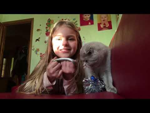 O zi din viața pisicii mele Mya❤️