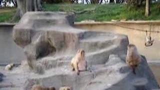 ここの猿は赤毛ザルです。数は50頭います。戦後、水族館が再開された...