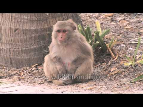 maxresdefault Two Monkeys Were Paid Unequally Excerpt From