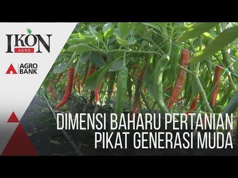 Ikon Agro: Dimensi baharu pertanian pikat generasi muda