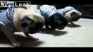 Смешные видео нарезки про животных!!! # 2